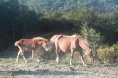 casa-rural-navarra-valdorba-4